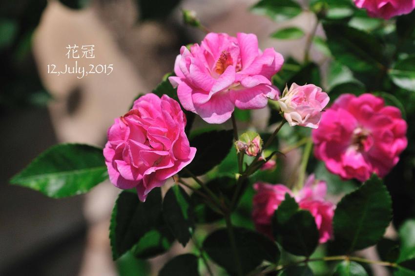 DSC_6787-L_convert_20150909073019.jpg