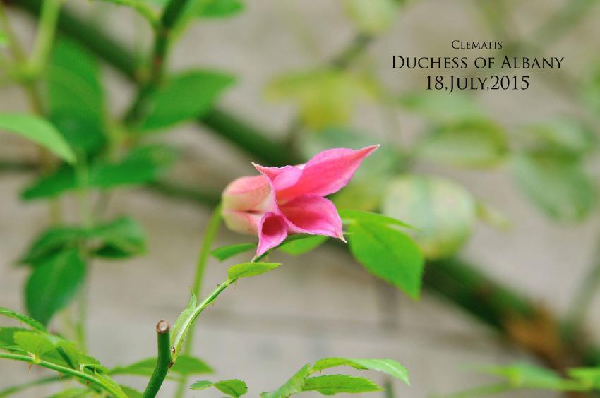 DSC_6898-L_convert_20150909073758.jpg