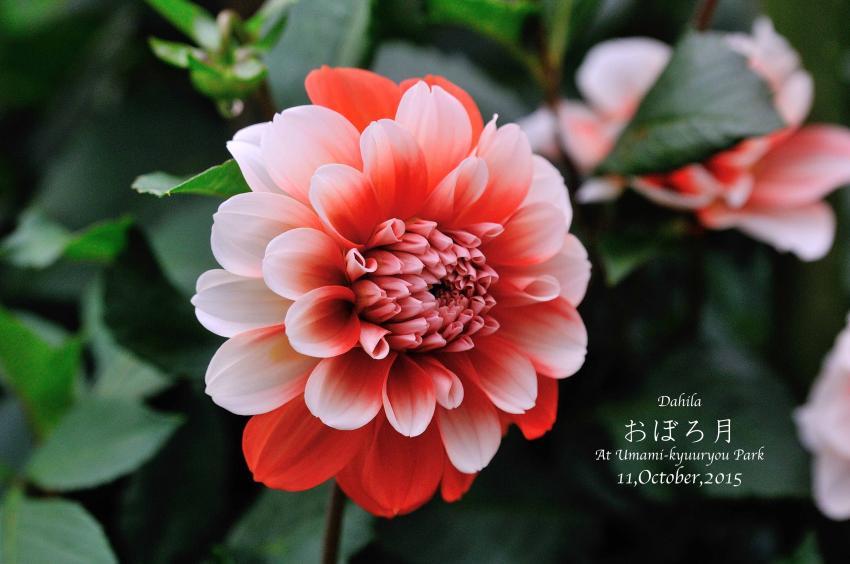 DSC_8578-L_convert_20151014072622.jpg