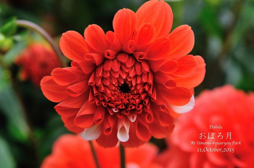DSC_8586-L_convert_20151014072825.jpg
