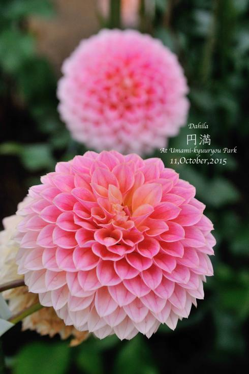 DSC_8619-L_convert_20151014074239.jpg