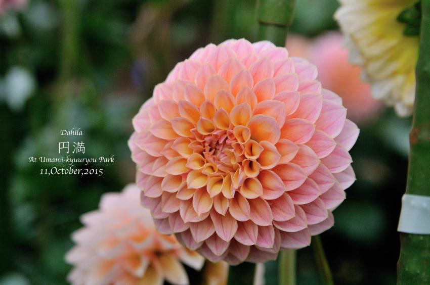 DSC_8623-L_convert_20151014074336.jpg