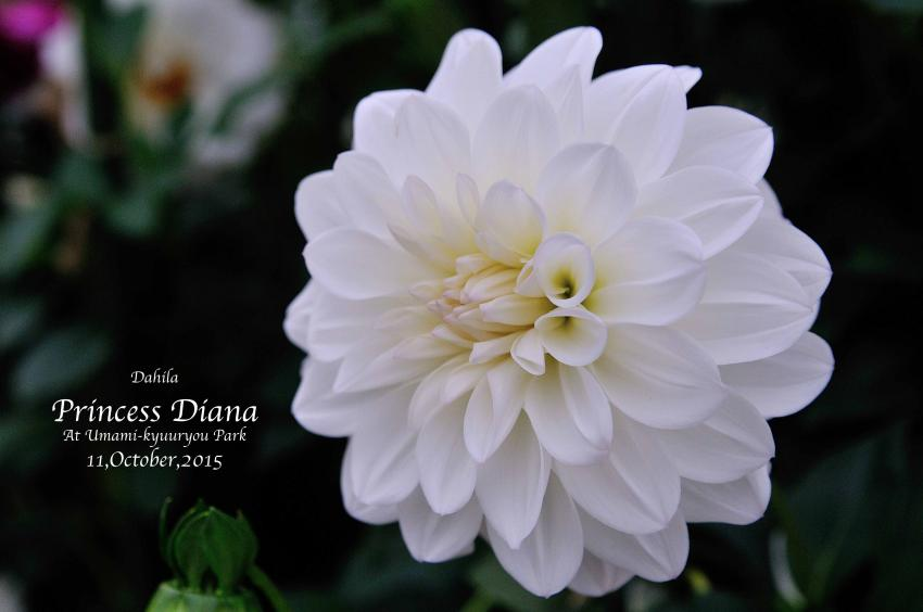 DSC_8666-L_convert_20151014073707.jpg