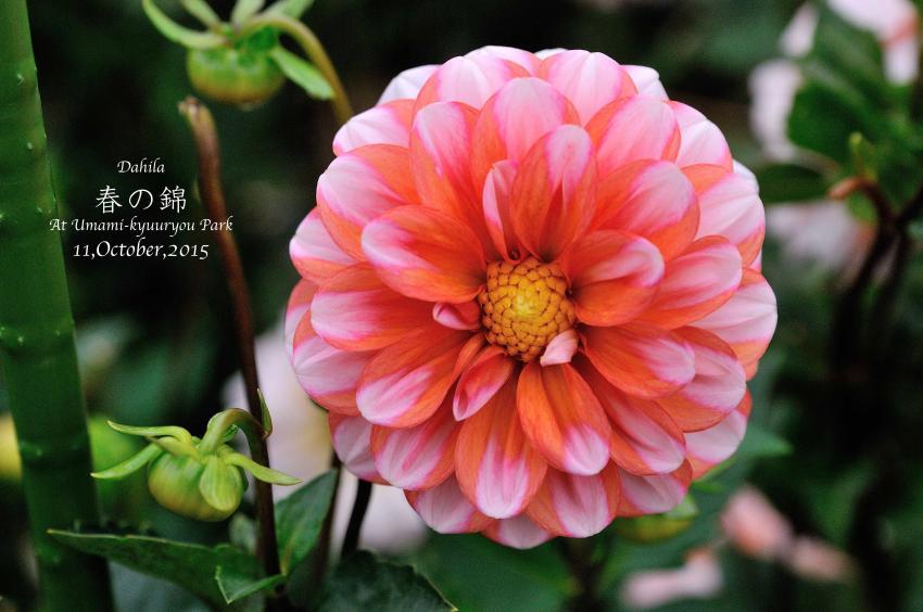 DSC_8704-L_convert_20151014074713.jpg