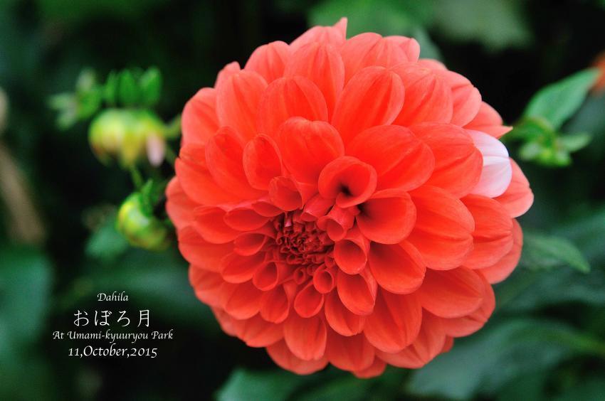 DSC_8713-L_convert_20151014072959.jpg