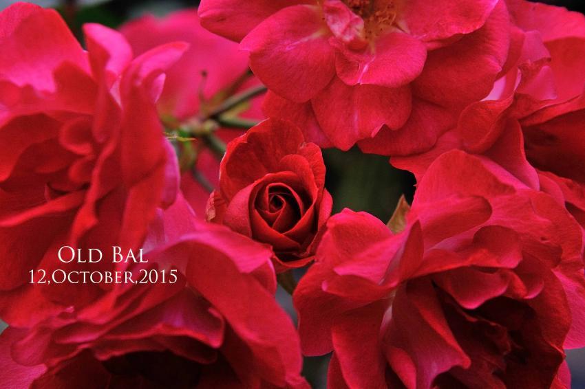 DSC_8853-L_convert_20151013151113.jpg