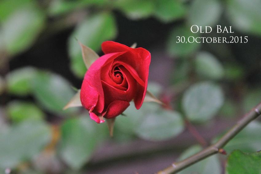 DSC_9326-L_convert_20151030095402.jpg
