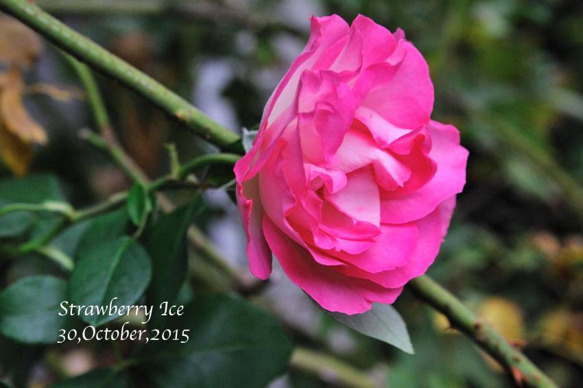 DSC_9328-L_convert_20151030095443.jpg