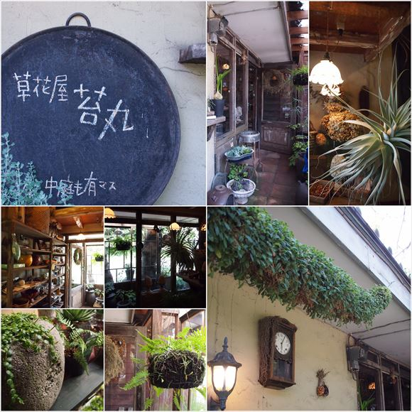 ゆうブログケロブログ植物に夢中 (9)