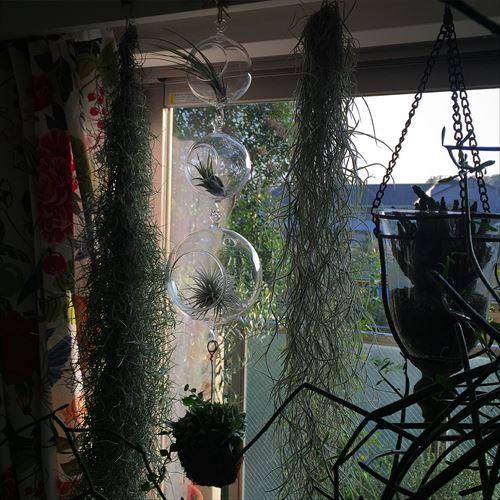 ゆうブログケロブログ植物に夢中 (16)