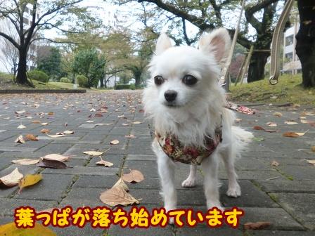 blog6916a.jpg