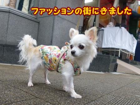 blog6943a.jpg