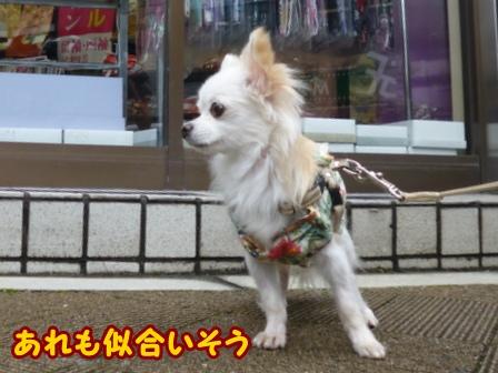 blog6949a.jpg