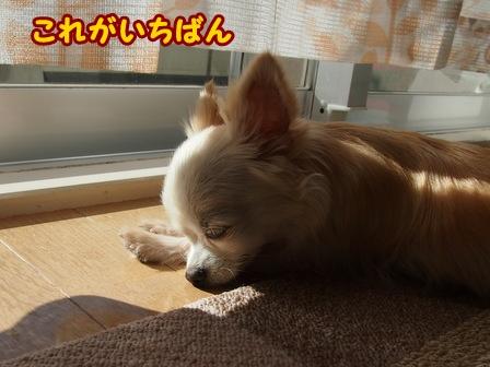 blog6971a.jpg