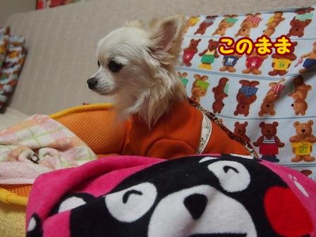 blog7032a.jpg