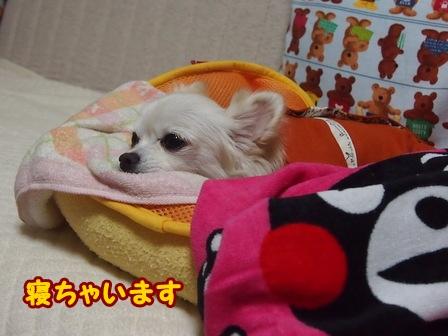 blog7033a.jpg