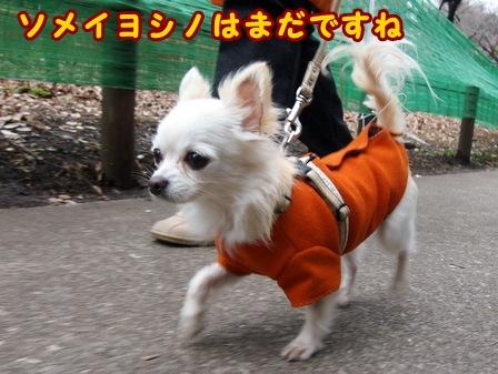 blog7338a.jpg