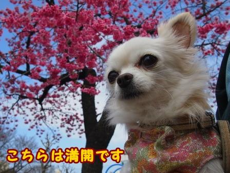 blog7354a.jpg