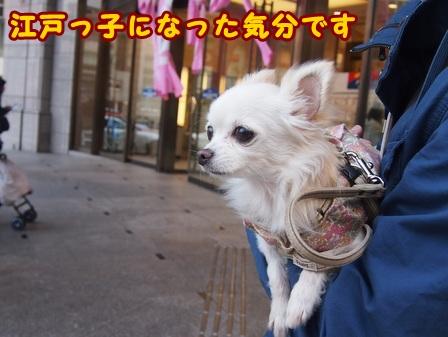 blog7391a.jpg