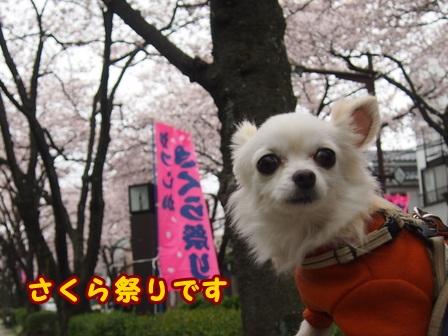 blog7397a.jpg