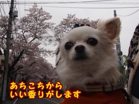 blog7402a.jpg