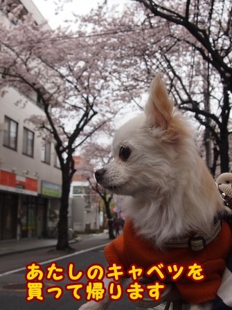 blog7404a.jpg
