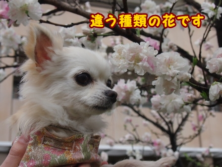 blog7414a.jpg