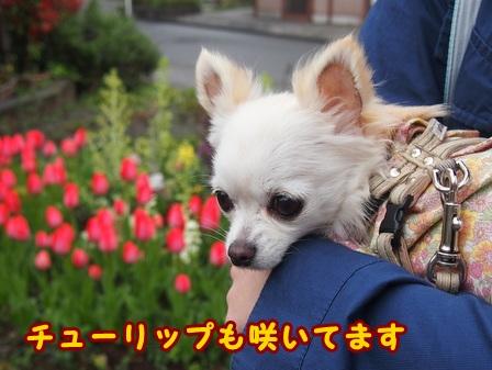 blog7416a.jpg