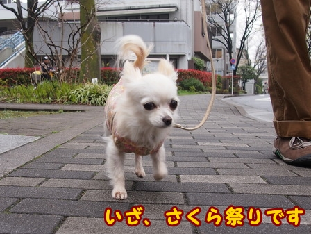 blog7417a.jpg