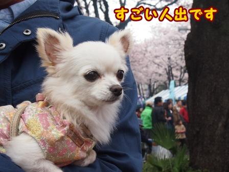 blog7420a.jpg