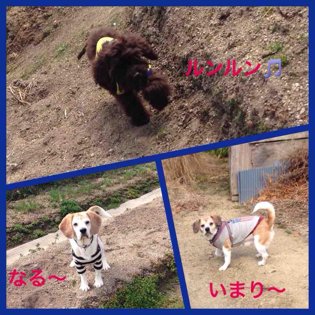 fc2blog_20160320232835a51.jpg