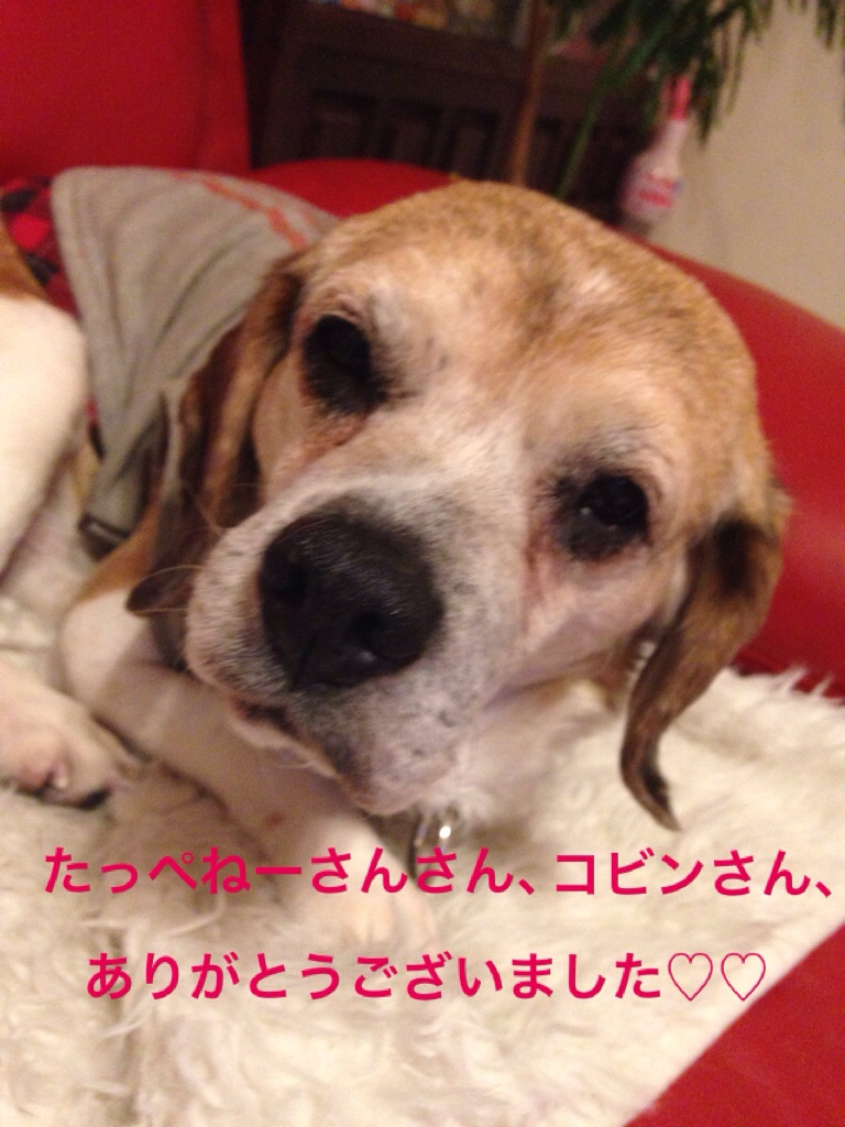 fc2blog_20160326235547f23.jpg