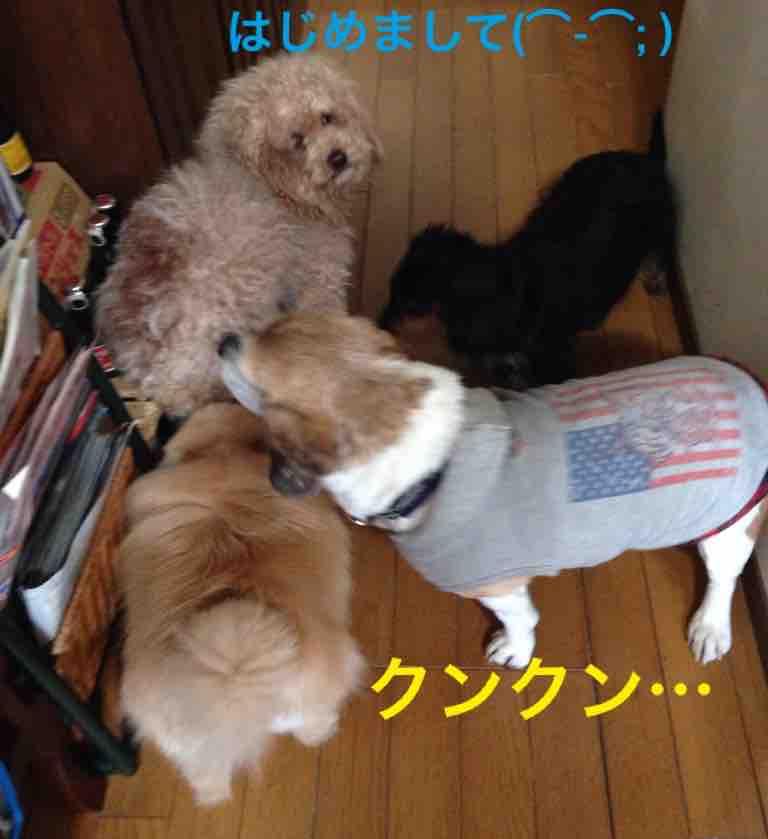 fc2blog_2016032814505740f.jpg