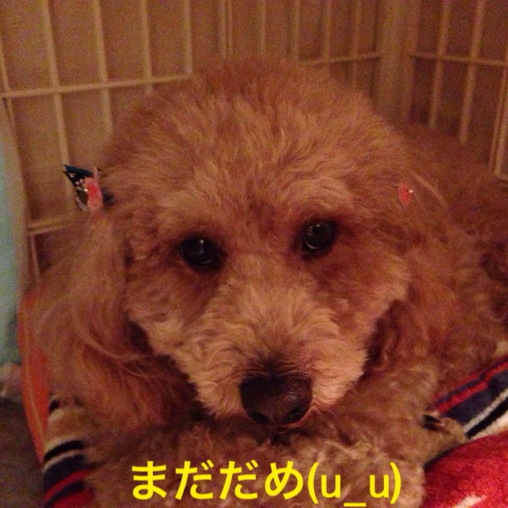 fc2blog_20160329232916411.jpg