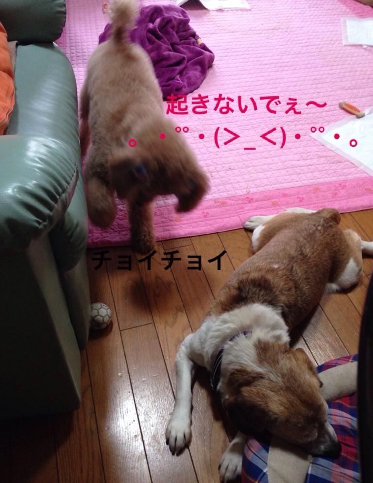 fc2blog_20160405234033a94.jpg