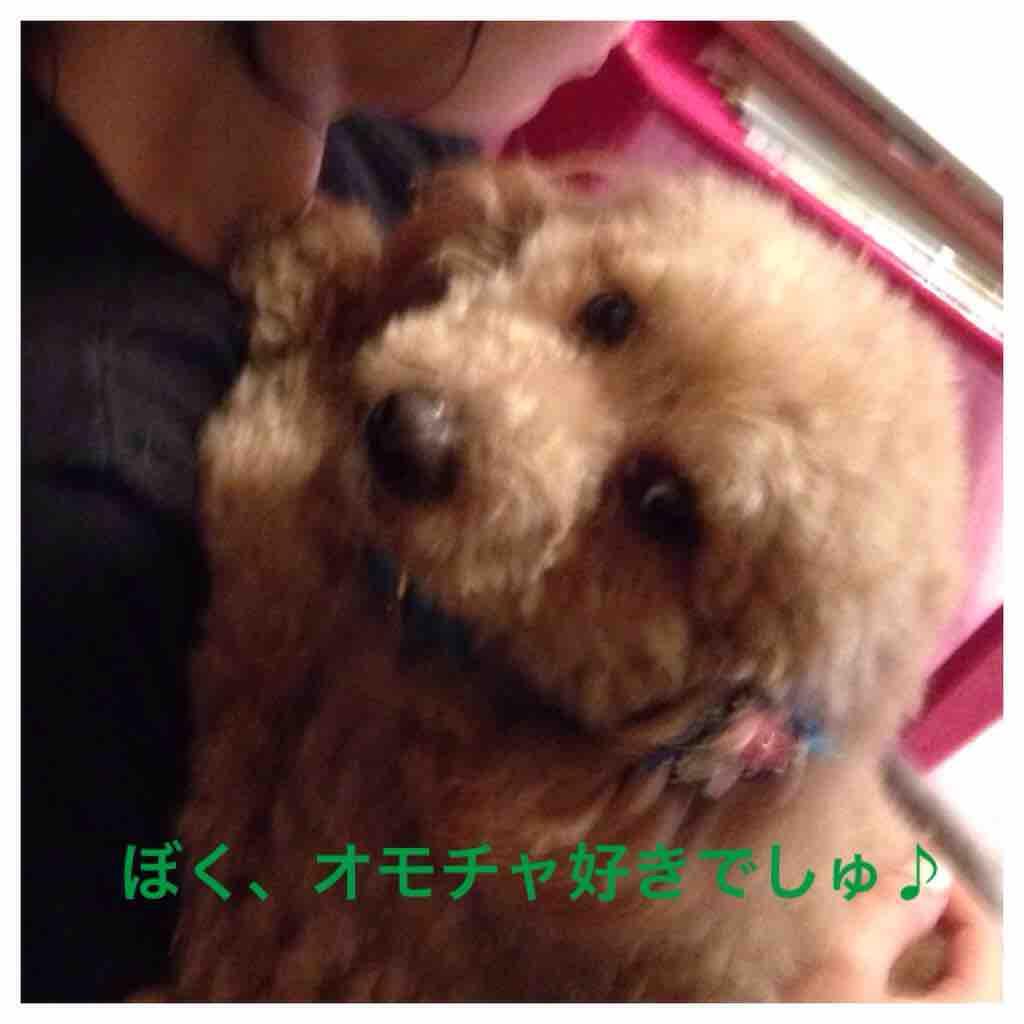 fc2blog_20160406021522549.jpg