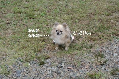 10_20151023142848c70.jpg