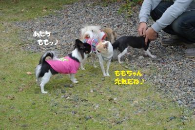 6_20151023142847a1b.jpg