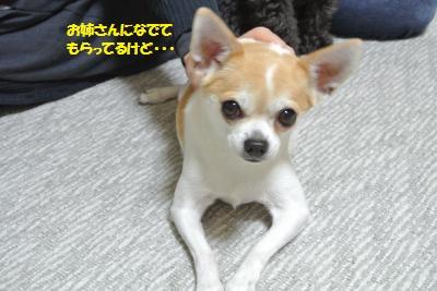 6_201511161041292ed.jpg