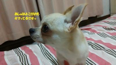 DSC_0321_convert_20151111104007.jpg