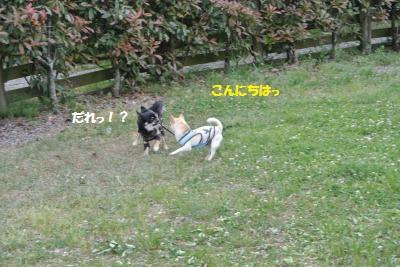 DSC_1820_convert_20151020113903.jpg