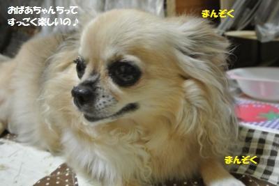 DSC_4276_convert_20151013093928.jpg