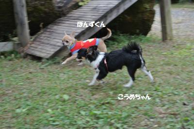 DSC_4474_convert_20151022105420.jpg