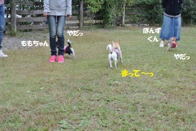 DSC_4481_convert_20151022154830.jpg