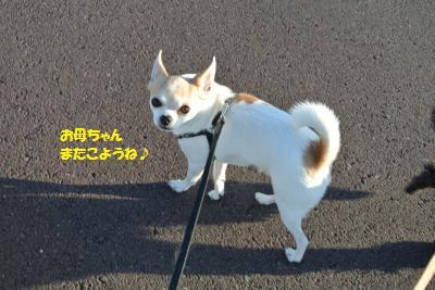 DSC_4574_convert_20151104111251.jpg