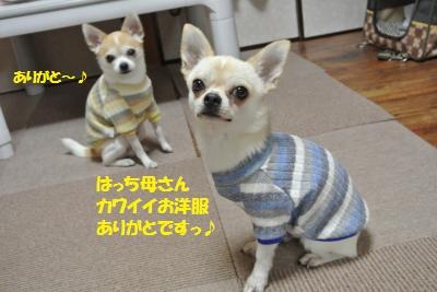DSC_4741_convert_20151113113541.jpg