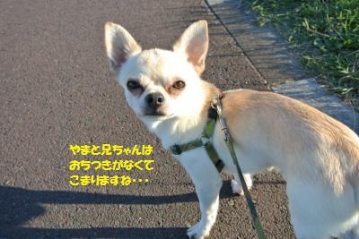 DSC_4946_convert_20151130145013.jpg