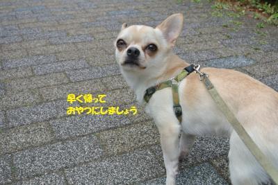 DSC_6915_convert_20160328105150.jpg