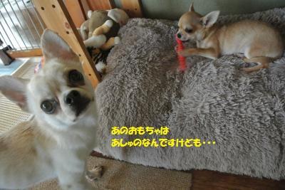 DSC_6973_convert_20160331132827.jpg