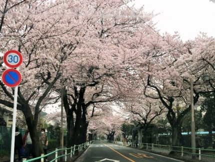 16-4-3 桜2